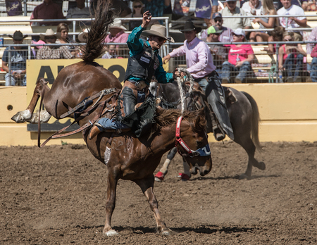 pima: Rodeo Cowboy at His Best, Red Bluff Round Up, California Editorial
