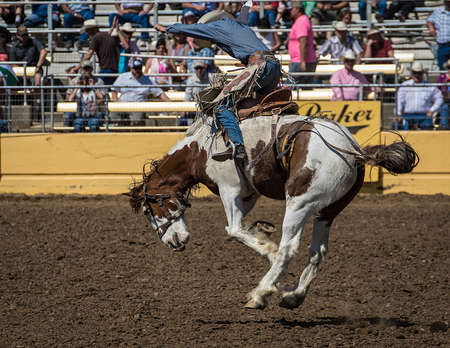 bucking bronco: Trying His Best, Red Bluff Round Up, California