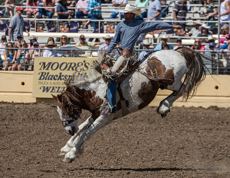 red bluff: Beautiful Horse and Ride, Red Bluff Round Up, California