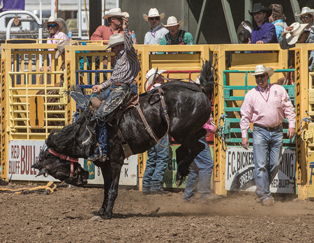 Bucking Bronco Rider, Red Bluff Round Up, California Editorial