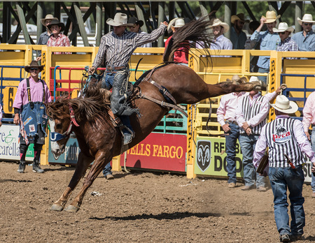bluff: Good Bucking Form, Red Bluff Round Up, California Editorial