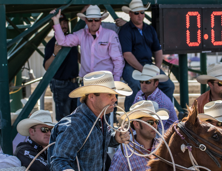 arena rodeo: Ready for Calf Roping,  Red Bluff Round Up, California