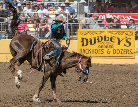 arena rodeo: Rodeo Cowboy Bronc Riding, Red Bluff Round Up, California