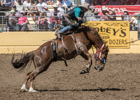 bluff: Rodeo Cowboy Holding On, Red Bluff Round Up, California