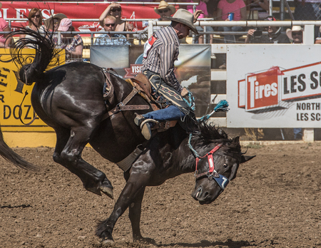 red bluff: High Kicking, Red Bluff Round Up, California Editorial