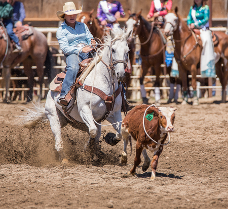 pima: Cowgirl gets her calf,  Cottonwood Rodeo, California Editorial