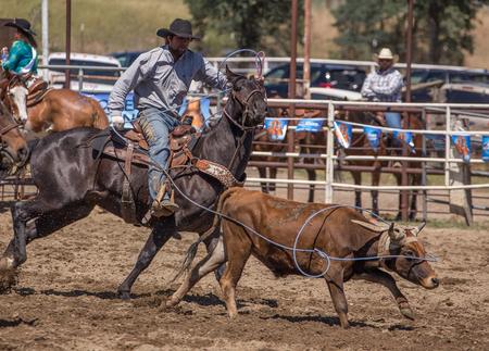 pima: Team roping,    Cottonwood Rodeo, California