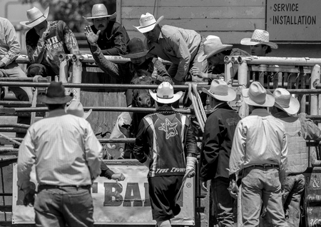 arena rodeo: Getting Ready in the Chutes, Cottonwood Rodeo Editorial