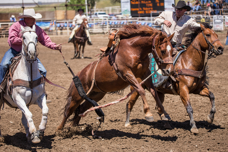 cottonwood: Catching the Wild One, Cottonwood, California Rodeo Editorial