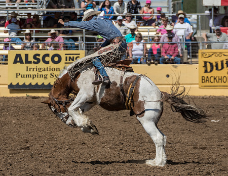 red bluff: Coming out of the Saddle, Red Bluff Rodeo, California. Editorial