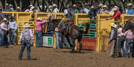 red bluff: The Action Begins, Red Bluff Rodeo, California. Editorial