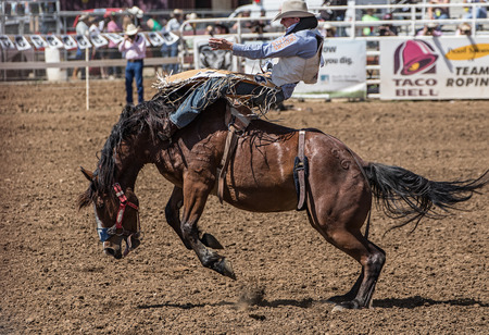 bucking bronco: Riding the Bucking Bronco, Red Bluff Rodeo, California.