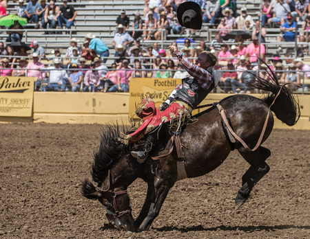 bronco: Riding the Bucking Bronco, Red Bluff Rodeo, California.