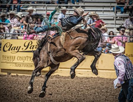 Saddle Bronc Cowboy, Red Bluff Rodeo, California.