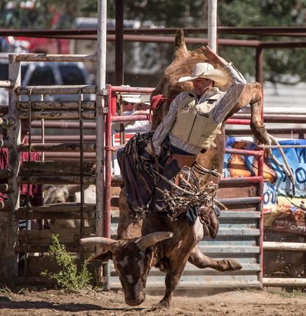 pima: Bull Rider, Cottonwood Rodeo , California.
