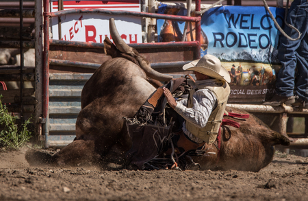 Bull Rider, Cottonwood Rodeo , California.