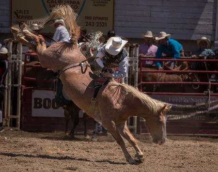 arena rodeo: Bronco Riding Cowboy, Cottonwood Rodeo, Cottonwood, California.