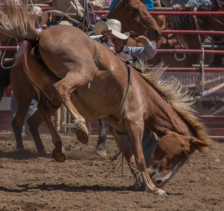 Bronco Riding Cowboy, Cottonwood Rodeo, Cottonwood, California.