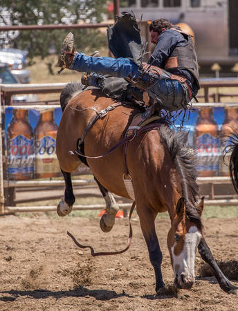 bronco: Bronco Riding Cowboy, Cottonwood Rodeo, Cottonwood, California.