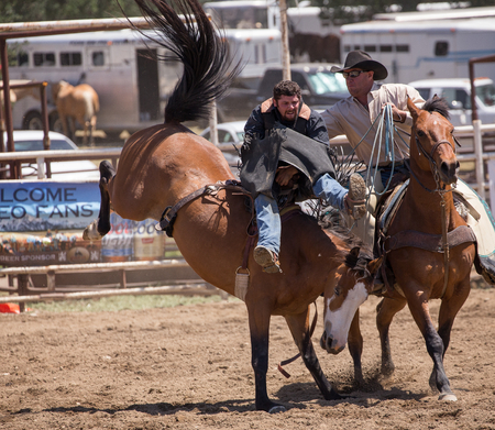 bronco: Bronco Riding Cowboy Gets Help , Cottonwood Rodeo, Cottonwood, California. Editorial