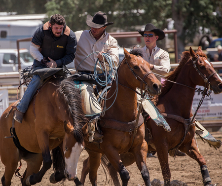 cottonwood: Bronco Riding Cowboy Gets Help , Cottonwood Rodeo, Cottonwood, California. Editorial