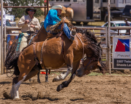 bucking bronco: Cottonwood Rodeo, Cottonwood, California. Editorial
