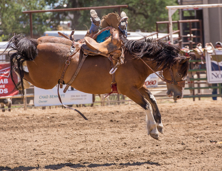 A cowboy loses his seat on his bucking bronco at the Cottonwood Rodeo, California Editorial