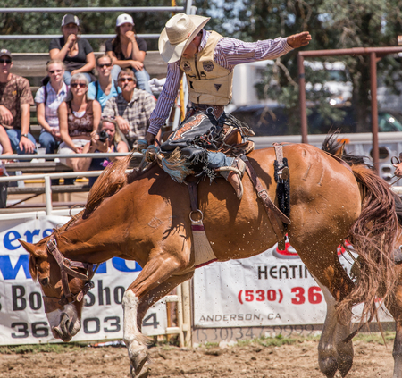 Cowboy Holds on tight at the Cottonwood Rodeo, California Editorial