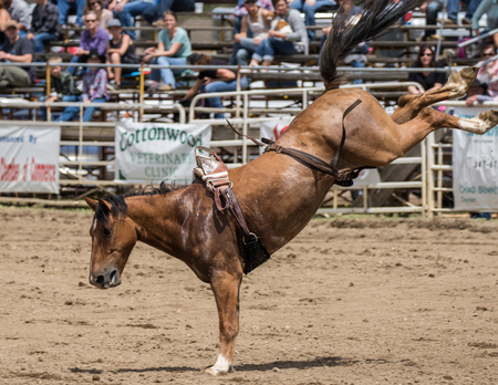 Bucking Bronco at the rodeo in Cottonwood, California.