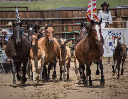 arena rodeo: Horses and ponies on display at the Cottonwood Rodeo in Cottonwood, California.