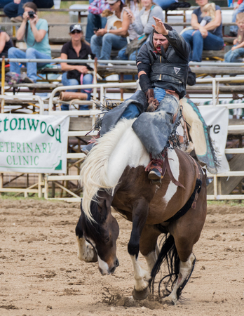 bronco: Cowboy riding a bucking bronco at the Cottonwood Rodeo in California. May 8, 2016.