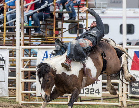 bucking bronco: Cowboy riding a bucking bronco at the Cottonwood Rodeo in California. May 8, 2016.