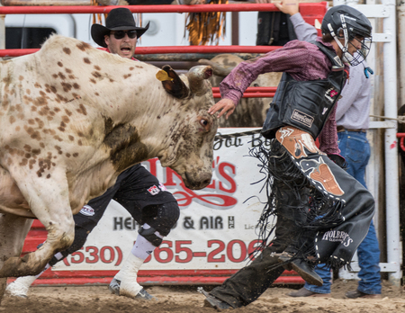 bucking bull: Bull riding action at the Cottonwood Rodeo in northern California on May 8th, 2016.