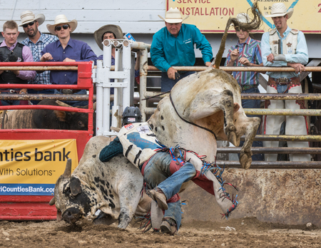 bucking bull: Rodeo action at the Cottonwood Rodeo in Cottonwood, California on May 8th, 2016.