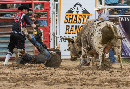 bucking bronco: Rodeo action at the Cottonwood Rodeo in Cottonwood, California on May 8th, 2016.