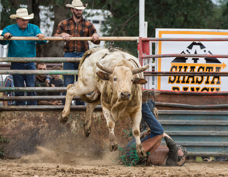 arena rodeo: Rodeo action at the Cottonwood Rodeo in Cottonwood, California on May 8th, 2016.