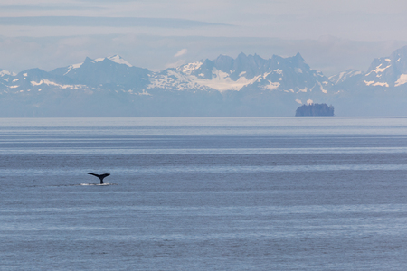 passage: Humpback whale and cruise ship in Alaskas Inner Passage. Editorial