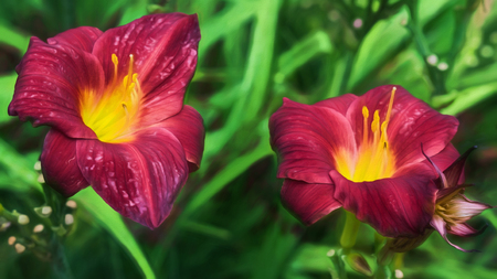 Flowers in Sitka, Alaska. Stock fotó