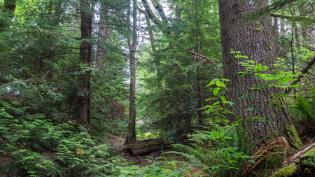 Forest in Sitka, Alaska.
