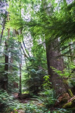 sitka: Forest in Sitka, Alaska.