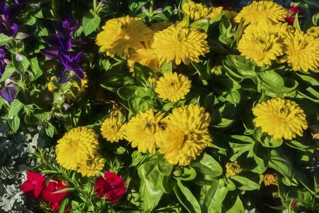 sitka: flowers in Sitka