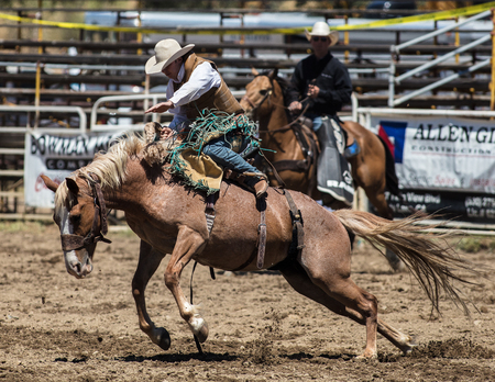 Bronc riding action at the Cottonwood Rodeo in California. Editorial