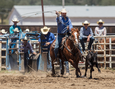 Calf roping action at the Cottonwood Rodeo in California.