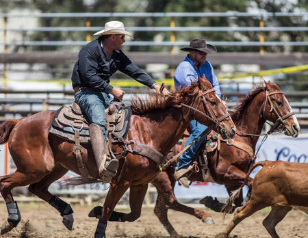 Steer Wrestling  action at the Cottonwood Rodeo in California.