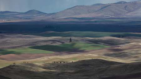 Farmland of the Palouse region of Eastern Washington