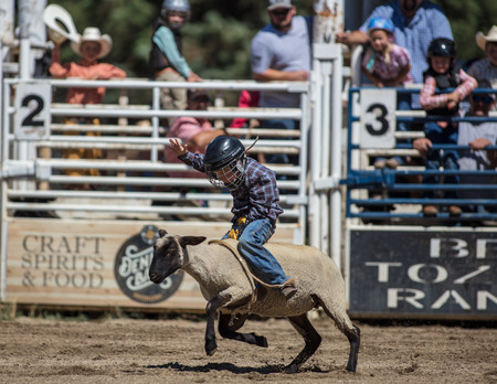 Mutton busting junior cowboy at the Scott Valley Rodeo in Etna, California.