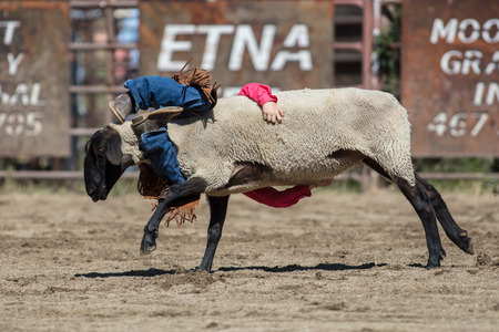 Children riding sheep at the mutton busting even at the Scott Valley Pleasure Park Rodeo in Etna, California.