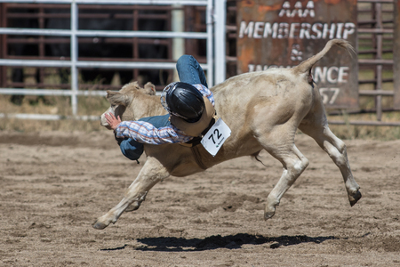 Children riding young calves  at the Scott Valley Pleasure Park Rodeo in Etna, California.