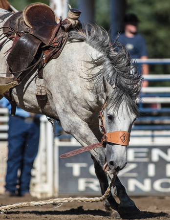 Rodeo action at the Scott Valley Rodeo in Etna, California. Editorial