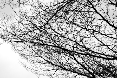 Bare tree branches on a pale white background - Image